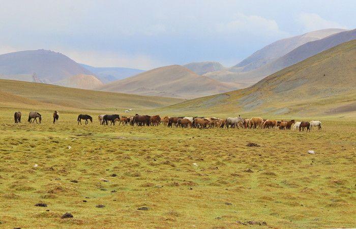 http://www.azimut59.ru/images/mongolia_7_68.jpg