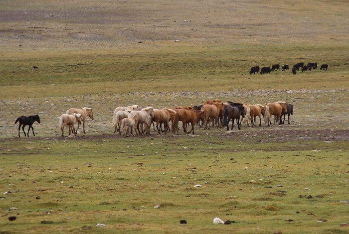 http://www.azimut59.ru/images/mongolia_7_69.jpg