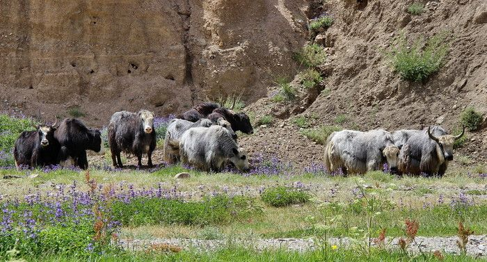 http://www.azimut59.ru/images/mongolia_7_9.jpg