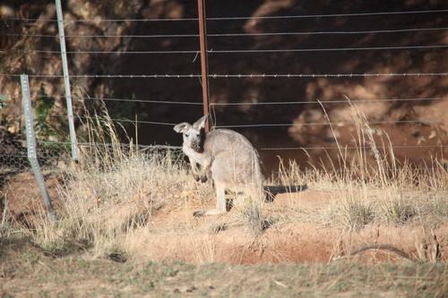 australia4.jpg