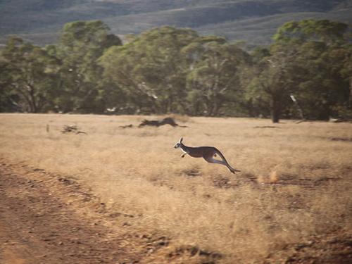 australia47.jpg
